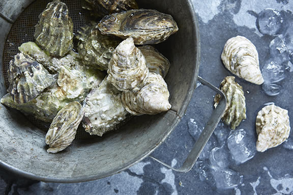 oysters for food and love